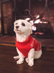 Best Hot Dog Sweaters Offer on Pet-Store - Review - Post Thumbnail